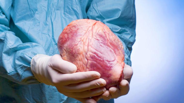 В Каталонии — рекордное число операций по трансплантации органов