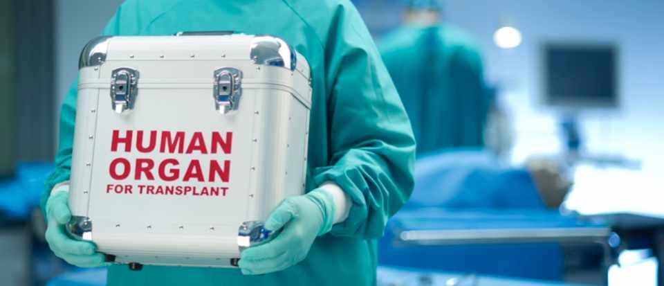 Трансплантация органов в Испании