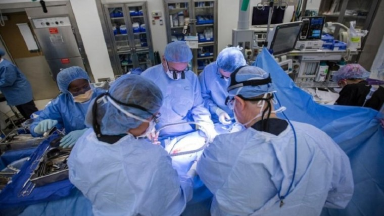 Трансплантация матки